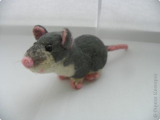 Крысик-симпотяшка! фото 2