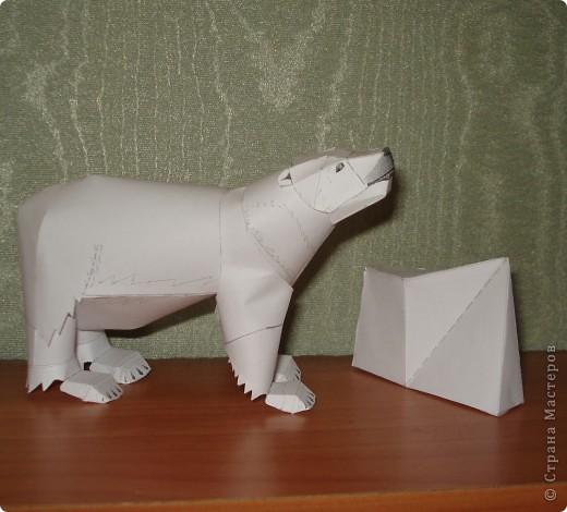 медведь фото 2