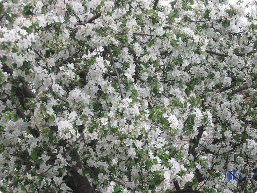 """Вспомнились такие строки из песни """"Тропинка в лесу Запахла весной Земля отогрелась  От солнечных дней"""" И так захотелось весны.Желаю чтобы  каждая тропинка в вашей жизни пахла только весной. И пусть цветочный аромат вьется шлейфом за вами. фото 15"""