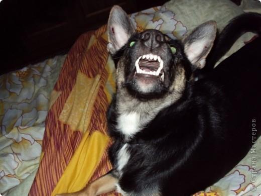 Жил-был пес... фото 10