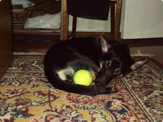 Жил-был пес... фото 11