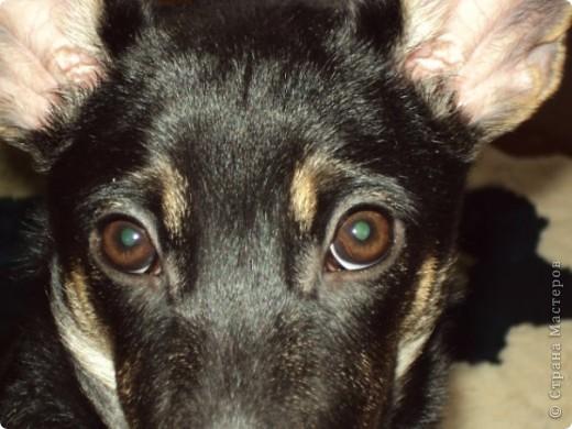 Жил-был пес... фото 1