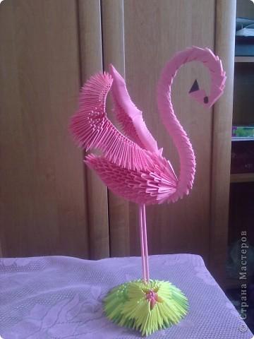 фламинго фото 1