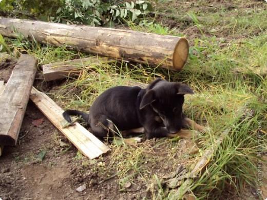 Жил-был пес... фото 3
