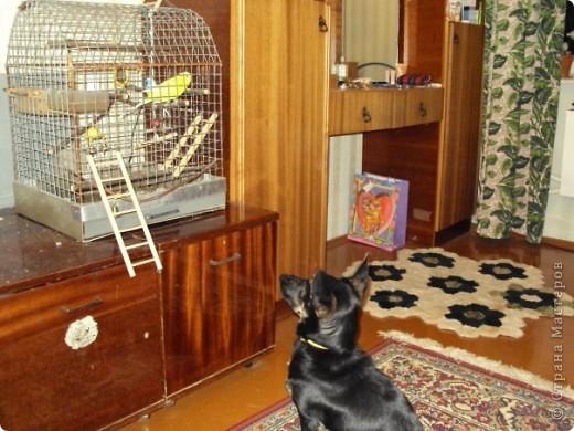 Жил-был пес... фото 6