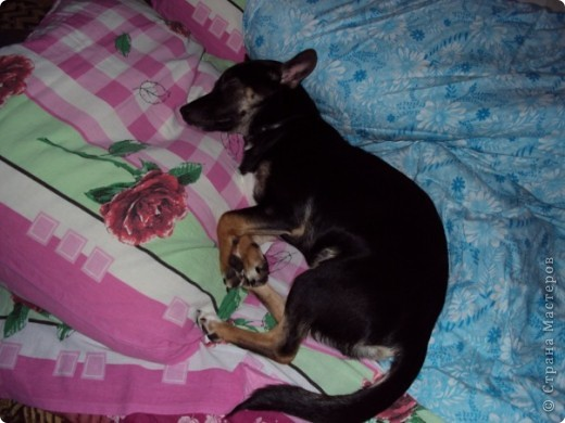 Жил-был пес... фото 7