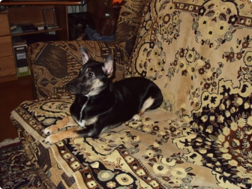 Жил-был пес... фото 8