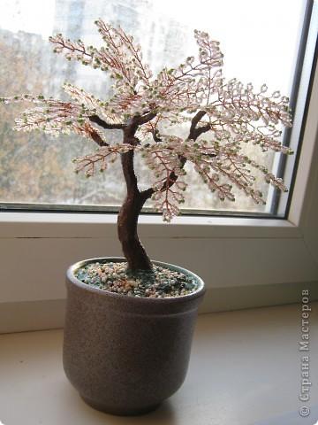 Моё первое деревце