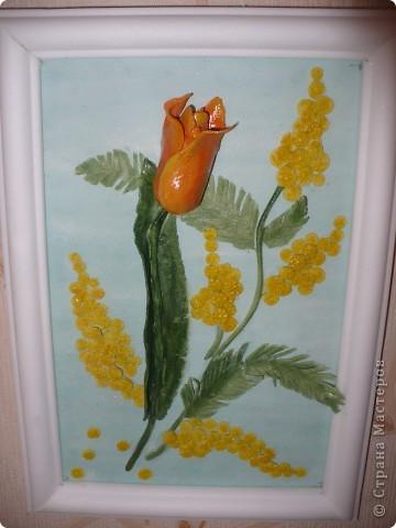 Мой первый тюльпан и мимоза... фото 1