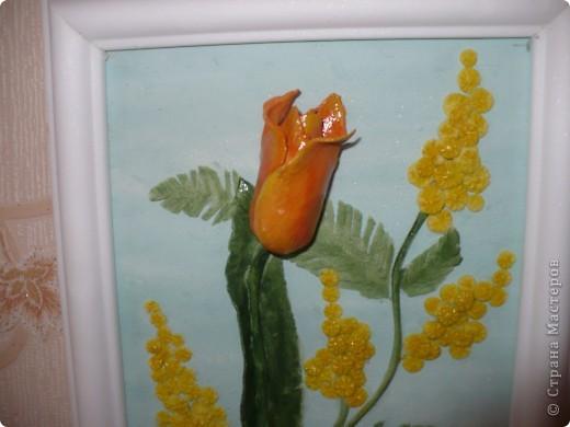 Мой первый тюльпан и мимоза... фото 2
