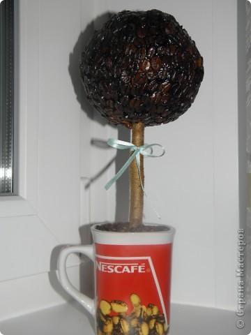 Насмотрелась на кофейные деревья материц и руки зачесались )))) Вот мое дерево! фото 1