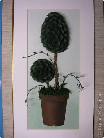 Хризантемы. фото 3
