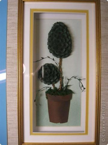 Хризантемы. фото 4