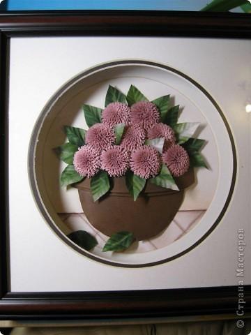 Хризантемы. фото 1