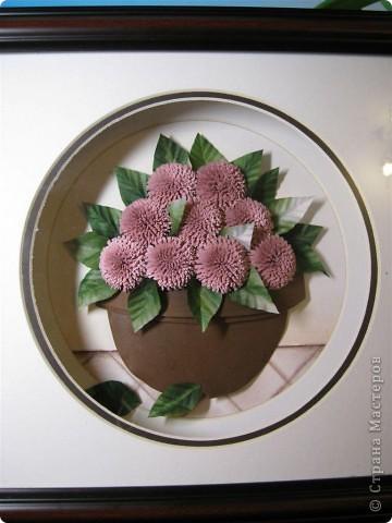 Хризантемы. фото 2