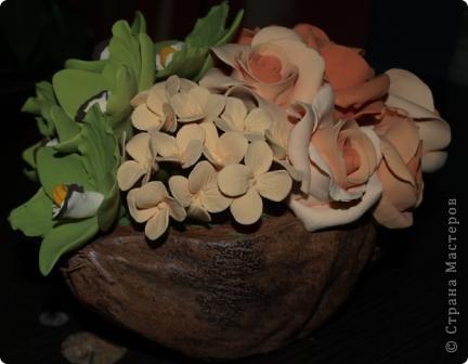 Орхидеи в кокосовой вазочке фото 4