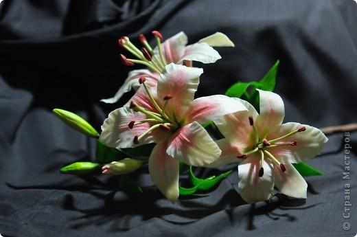 Ещё одна лилия. фото 4