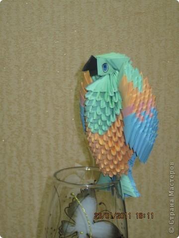 Мой первый попугай