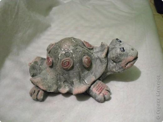 черепаха ха