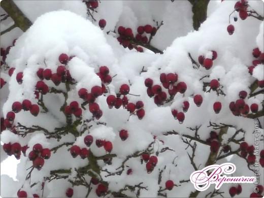 Красный боярышник в снегу фото 2
