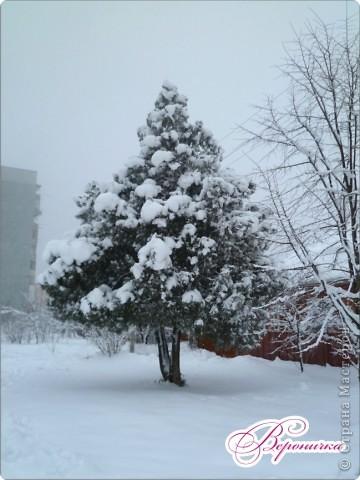 Красный боярышник в снегу фото 4