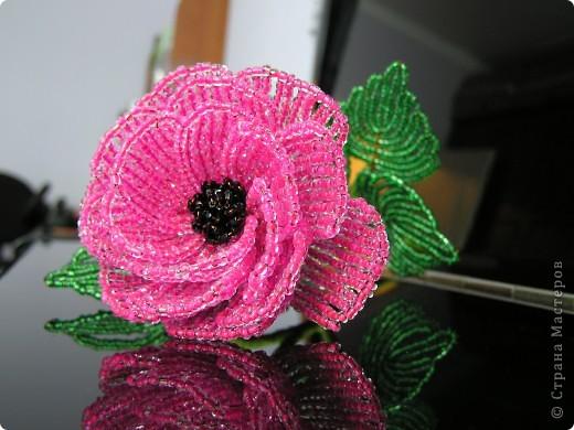 Розовый пион фото 1