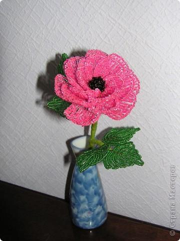 Розовый пион фото 2