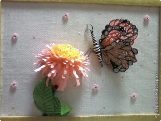 Бабочка и цветок фото 2