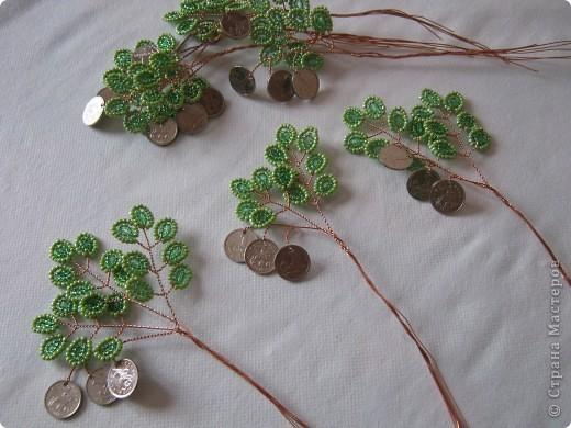 Денежное деревце фото 7