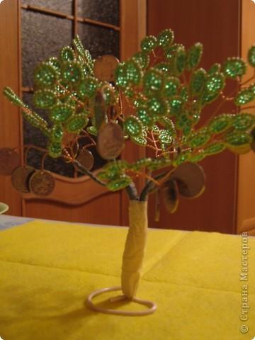 Денежное деревце фото 14