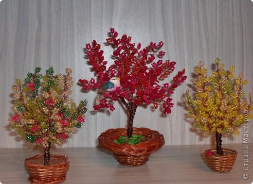 Наши первые деревья