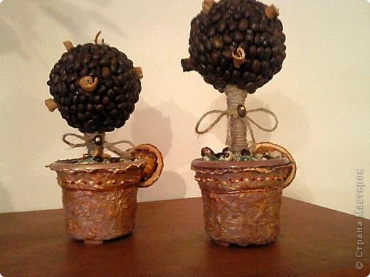 Кофейные деревья с апельсинкой фото 1