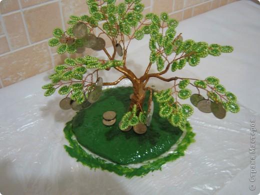 Денежное деревце фото 18