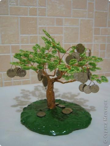 Денежное деревце фото 19