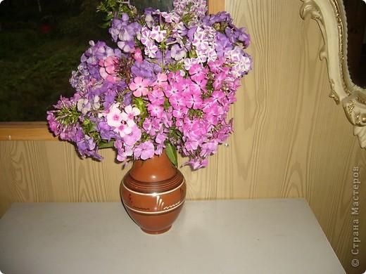 """""""Обновки"""" моего цветника. Осень! фото 1"""