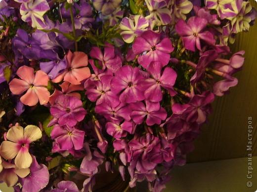 """""""Обновки"""" моего цветника. Осень! фото 11"""