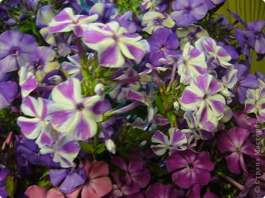 """""""Обновки"""" моего цветника. Осень! фото 12"""