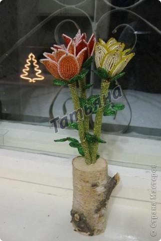 Красные розы. фото 2