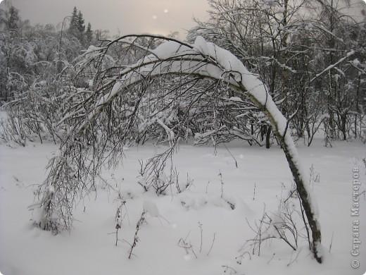 """В эти морозные, снежные дни, что были на Рождество и Крещение нам удалось подобраться поближе к нашим пернатым друзьям. И вот что удивительно: зимой Фунтик на птиц  не охотится. А вот летом... Признаюсь вам честно, друзья мои, ему за это от меня влетает. Вначале он не понимал:""""За что?!! Охота есть охота..."""" А потом стал просто-напросто охотиться тайком от меня. Я обнаруживала порой только  следы этой охоты.  фото 1"""