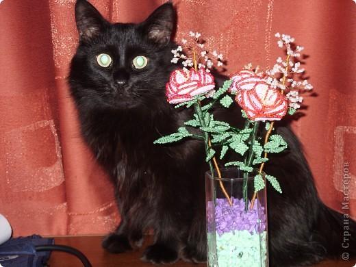 Розы и кот фото 1