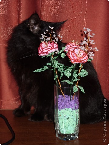 Розы и кот фото 2