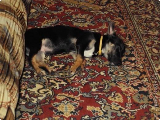 """И снова Фердинанд I Вездесущий (с двумя """"с"""", конечно). Хочу показать, как сладко спит наше солнышко и поднять вам настроение ))) фото 3"""