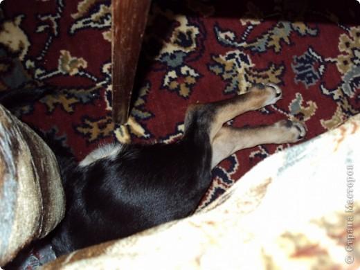 """И снова Фердинанд I Вездесущий (с двумя """"с"""", конечно). Хочу показать, как сладко спит наше солнышко и поднять вам настроение ))) фото 6"""