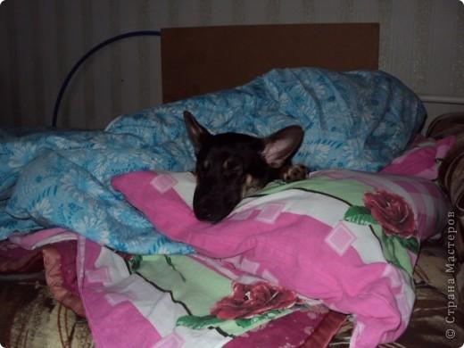 """И снова Фердинанд I Вездесущий (с двумя """"с"""", конечно). Хочу показать, как сладко спит наше солнышко и поднять вам настроение ))) фото 9"""