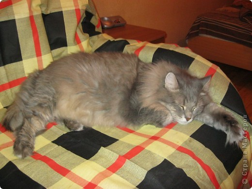 Знакомьтесь - это Тюлень. Он самый ласковый и ленивый кот. Сейчас он спит на своём любимом кресле. фото 1