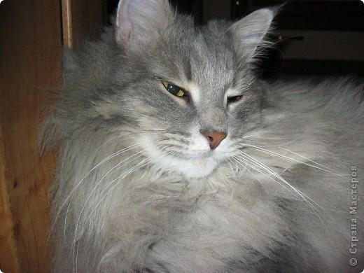 Знакомьтесь - это Тюлень. Он самый ласковый и ленивый кот. Сейчас он спит на своём любимом кресле. фото 11