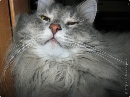 Знакомьтесь - это Тюлень. Он самый ласковый и ленивый кот. Сейчас он спит на своём любимом кресле. фото 10