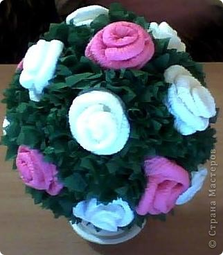 Вот такие розы получились у нас.