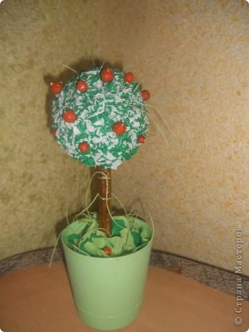 мое первое апельсиновое дерево фото 3