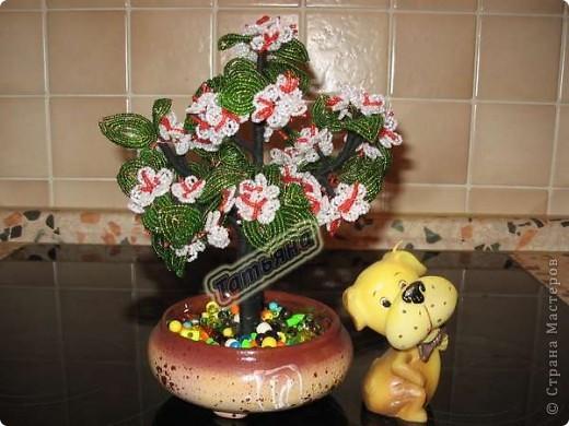 Яблоня с плодами и вишня в цвету. фото 1